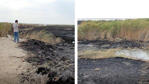 Пожар на озере Судочье - Sputnik Ўзбекистон