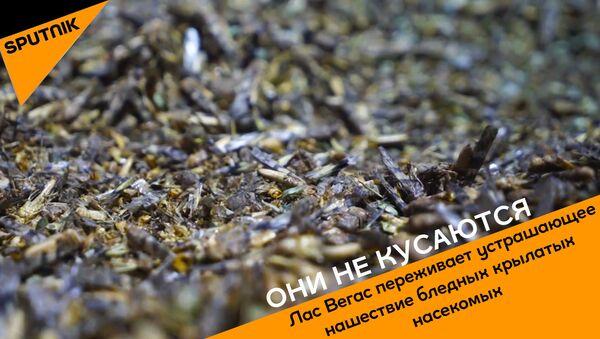 Oni ne kusayutsya - Sputnik Oʻzbekiston