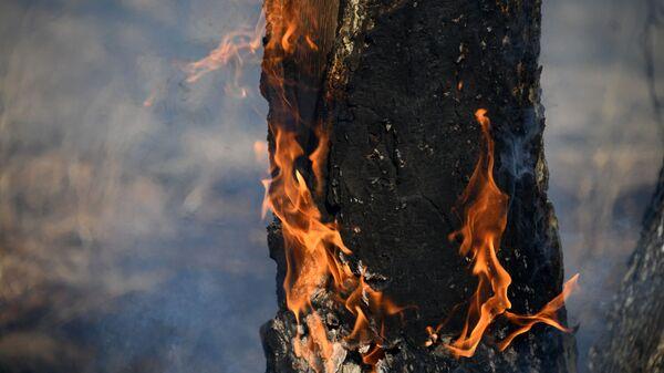 Лесной пожар - Sputnik Узбекистан