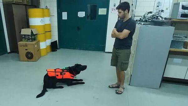 В Израиле создали пульт управления собакой – видео - Sputnik Узбекистан