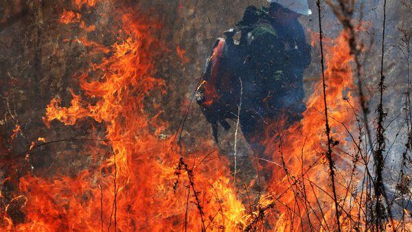 Учения по тушению лесных пожаров в Приморском крае   - Sputnik Ўзбекистон