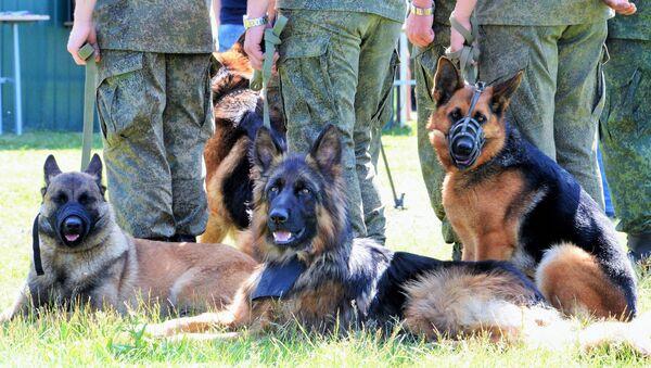 Военнослужащие со своими собаками на открытии Всеармейского этапа конкурса кинологов ВС РФ Верный друг - Sputnik Узбекистан