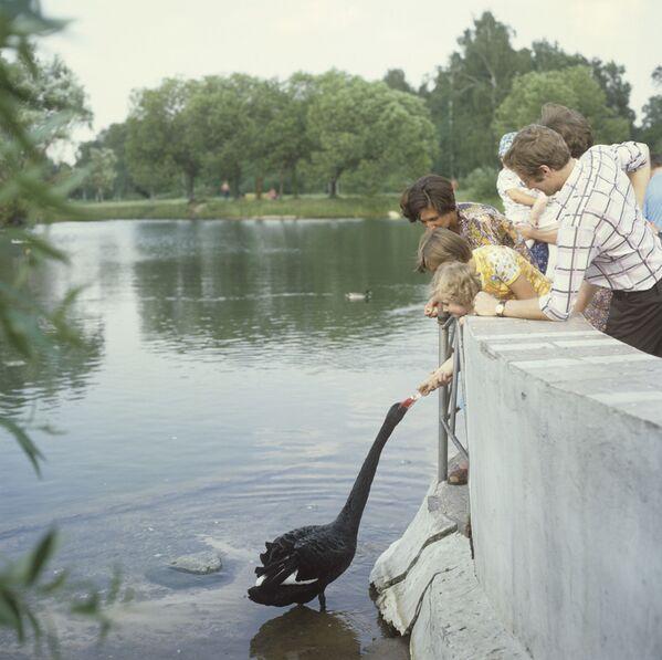 В Главном ботаническом саду Академии наук СССР. 1979 год - Sputnik Узбекистан