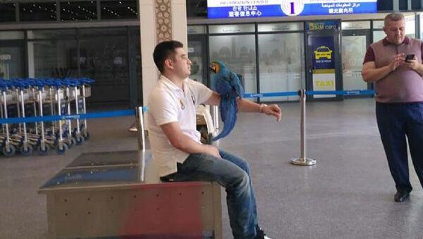 В аэропорту Ташкента задержали попугая - фото - Sputnik Узбекистан