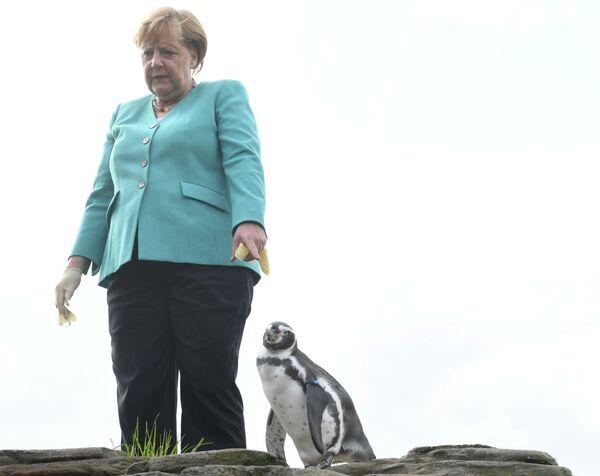 Канцлер Германии Ангела Меркель кормит пингвинов в Штральзунде, Северная Германия - Sputnik Узбекистан