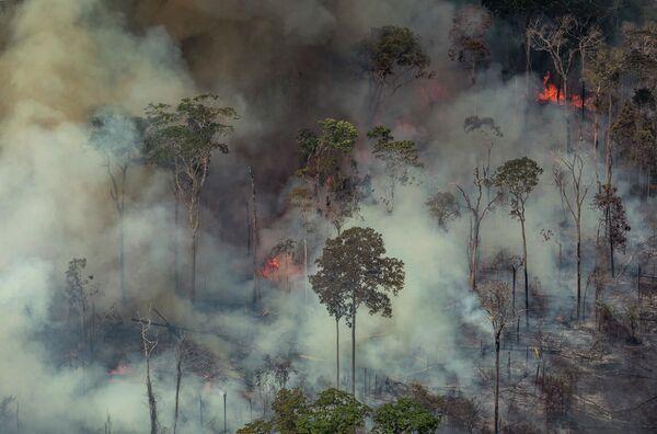 Лесные пожары в Бразилии  - Sputnik Узбекистан