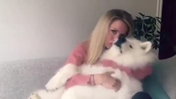 Огромный пес развалился на руках у хозяйки - милое видео - Sputnik Узбекистан