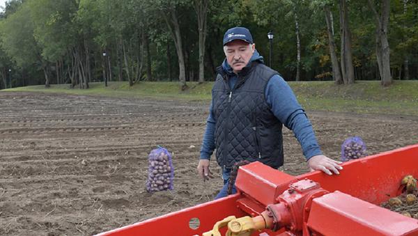 Лукашенко собрал урожай узбекских дынь на собственных полях - Sputnik Узбекистан