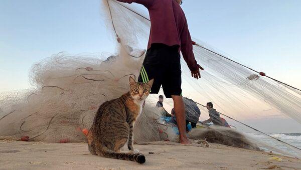 Кошка и палестинский рыбак на пляже в северной части Сектора Газа  - Sputnik Ўзбекистон