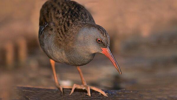 День осенних наблюдений за птицами пройдет в Узбекистане - Sputnik Узбекистан