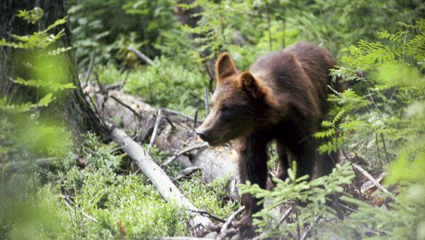 Medved - Sputnik Oʻzbekiston