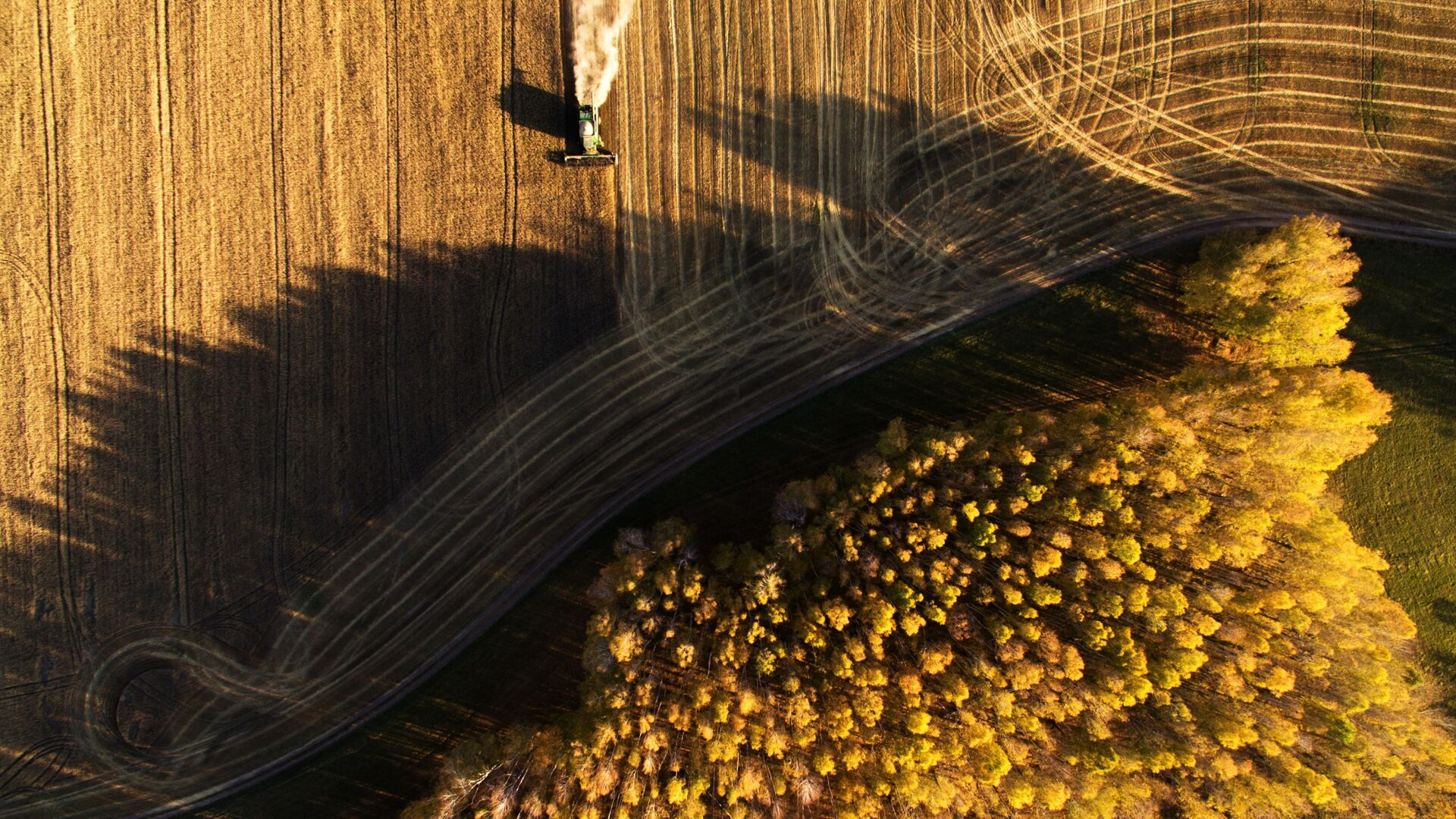 Уборка урожая зерновых в Новосибирской области - Sputnik Узбекистан, 1920, 02.10.2021