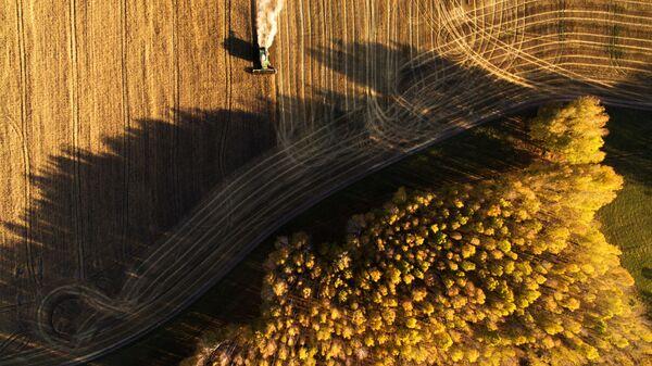 Уборка урожая зерновых в Новосибирской области - Sputnik Узбекистан