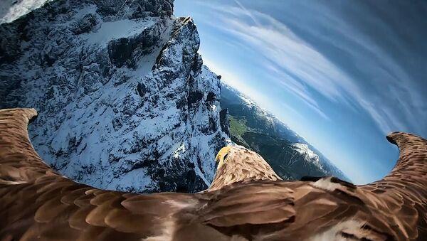 С камерой на крыльях: полет орлана над Альпами - Sputnik Ўзбекистон