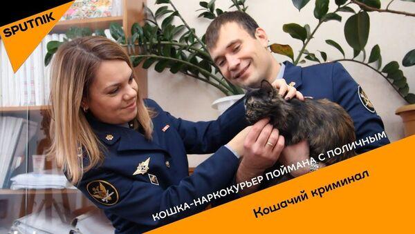 Кошка-наркокурьер поймана с поличным - Sputnik Ўзбекистон