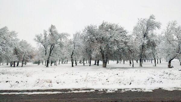 Выпал первый снег  - Sputnik Ўзбекистон