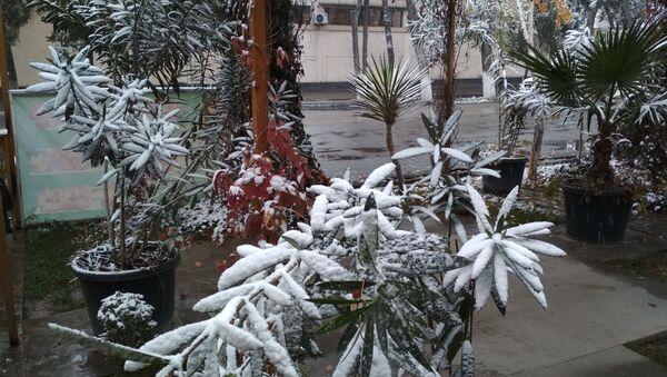 Снег в Ташкенте - Sputnik Узбекистан