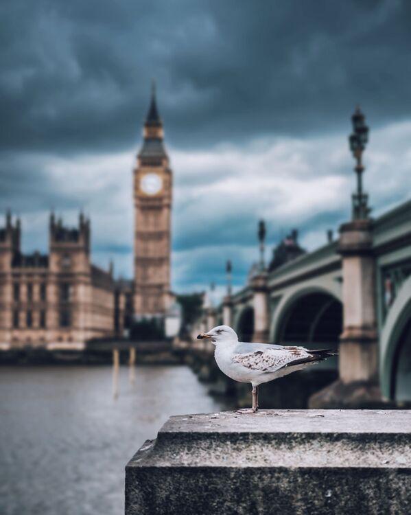 A gull against the background of Big Ben, London - Sputnik Ўзбекистон