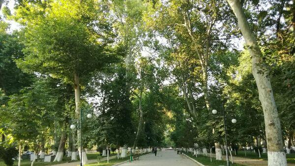 Университетский проспект в Самарканде - Sputnik Ўзбекистон