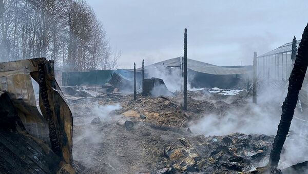 V Podmoskovye proizoshel pojar na territorii teplichnogo kompleksa - Sputnik Oʻzbekiston