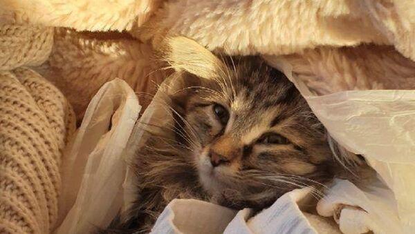 Бухарское чудо: история женщины из Петербурга и ее узбекского котенка - Sputnik Узбекистан