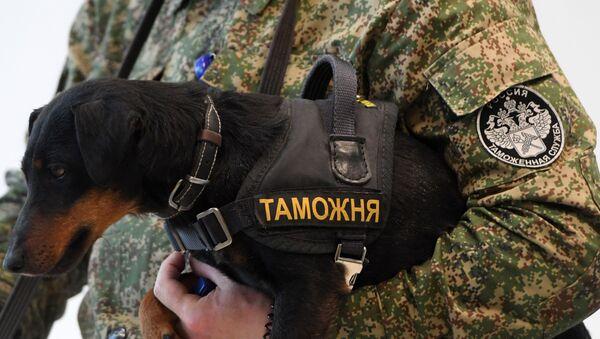 Работа таможенного поста аэропорта Казань - Sputnik Узбекистан