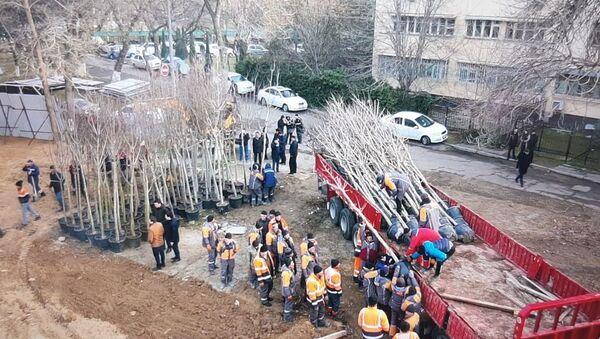 Работа по высадке деревьев в обновляемом парке идёт полным ходом - Sputnik Ўзбекистон