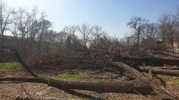 Незаконная вырубка деревьев в Яккасарайскм районе Ташкента - Sputnik Узбекистан