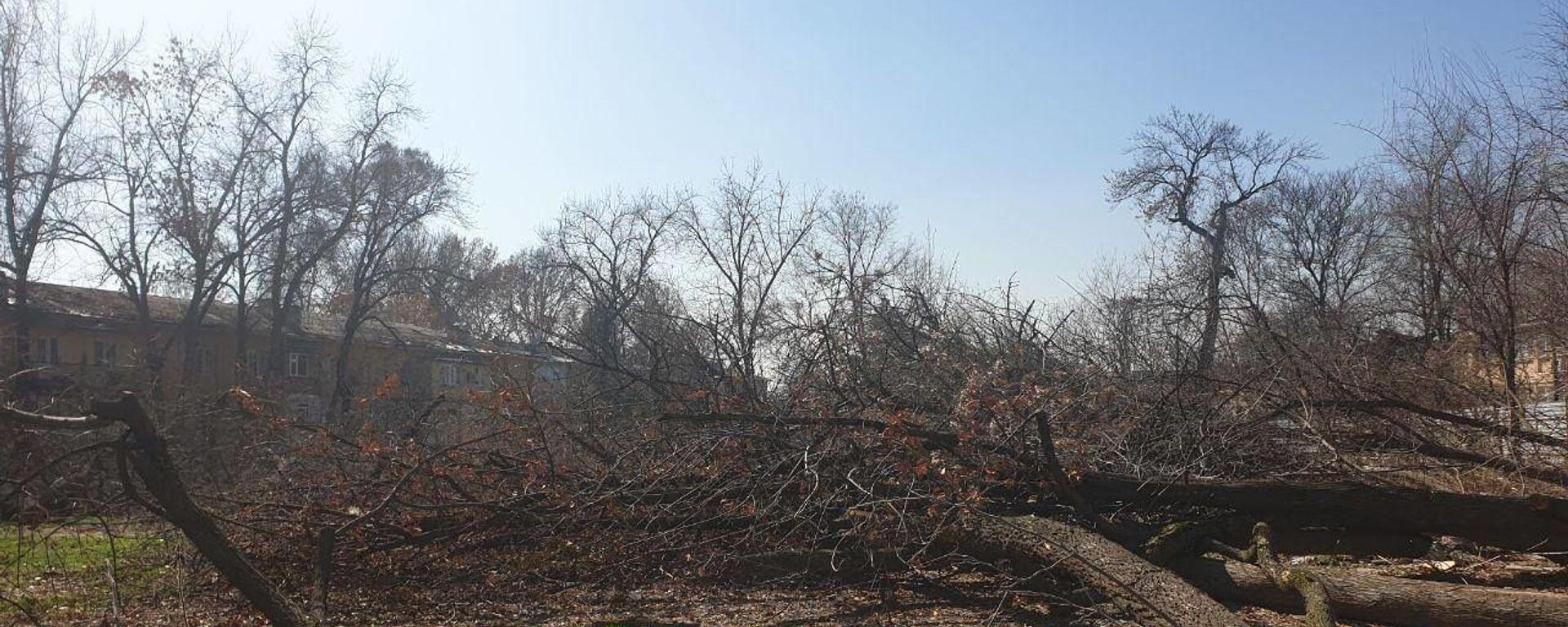 Незаконная вырубка деревьев в Яккасарайскм районе Ташкента - Sputnik Узбекистан, 1920, 24.08.2021