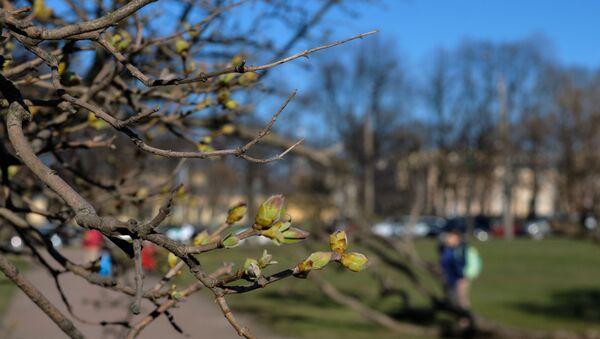 Ветви деревьев на Марсовом поле в Санкт-Петербурге. - Sputnik Ўзбекистон