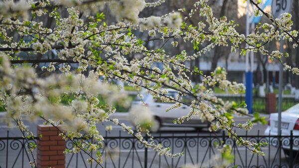 Весна в Ташкенте - Sputnik Узбекистан
