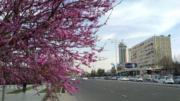 Весна в Ташкенте - Sputnik Ўзбекистон