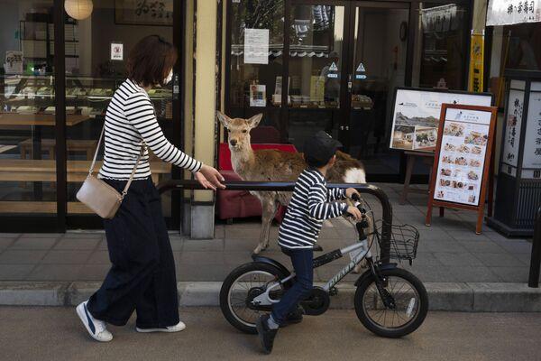 Yaponiyaning Nara shahrida doʻkon oldiga kiyik keldi. 19.03.20   - Sputnik Oʻzbekiston
