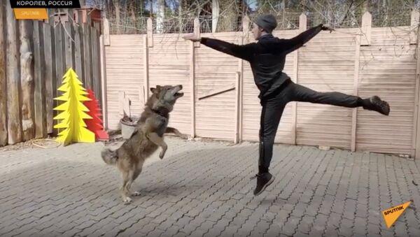 Артист балета оставил сцену ради танцев с волками - Sputnik Узбекистан