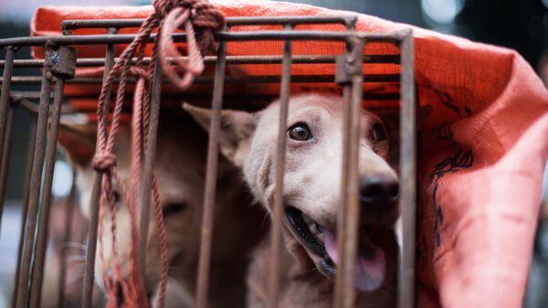 Собака в клетке на одном из рынков Китая - Sputnik Ўзбекистон