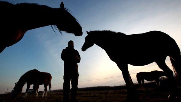 Лошади на конном заводе - Sputnik Узбекистан