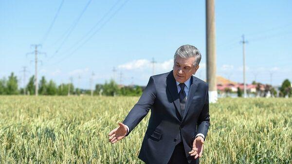 Шавкат Мирзиёев посетил хозяйство Кухна водий бахори в Алтынкульском районе Андижаской области - Sputnik Ўзбекистон