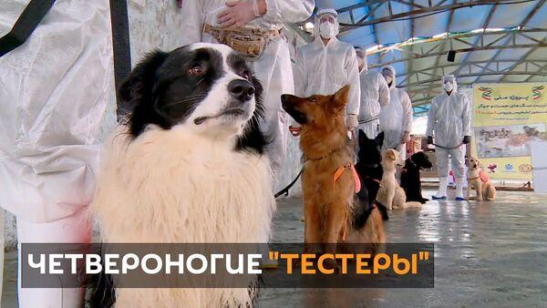 Собачья работа: в Иране животных учат определять зараженных коронавирусом людей - Sputnik Узбекистан