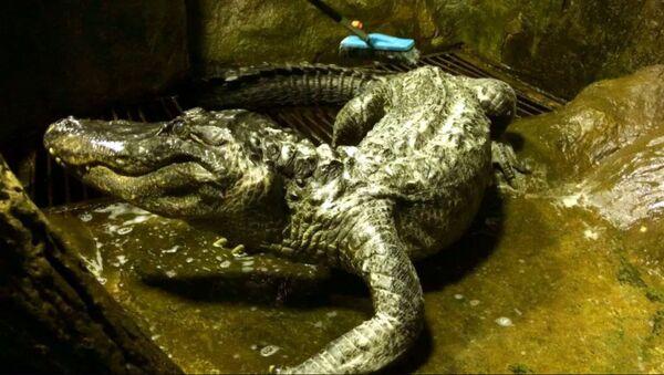 Alligator Saturn - Sputnik Oʻzbekiston