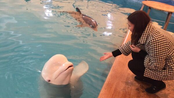Любители трюков: дельфины в бишкекском бассейне - Sputnik Узбекистан