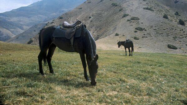 Кони на высокогорном пастбище в Чактальском заповеднике - Sputnik Узбекистан