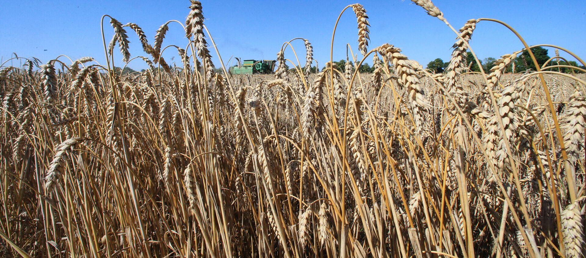 Уборка пшеницы  - Sputnik Узбекистан, 1920, 15.06.2020