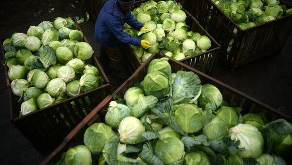 Сборка урожая капусты - Sputnik Узбекистан