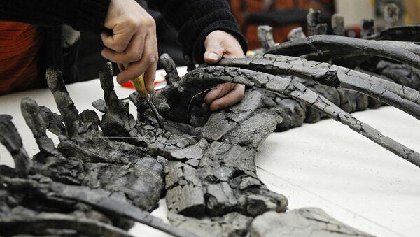 Палеонтолог восстанавливает по фрагментам скелет динозавра - Sputnik Узбекистан