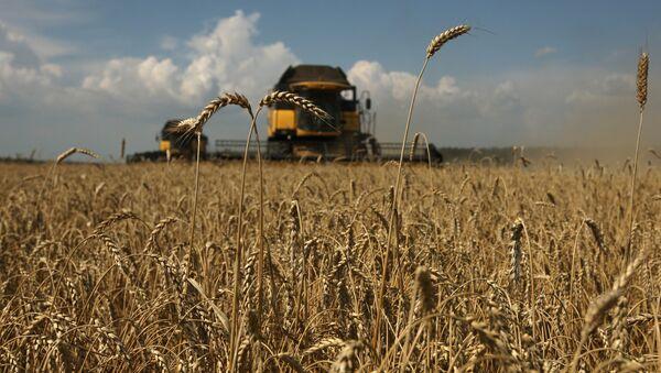 Уборка зерновых на Юге России - Sputnik Узбекистан