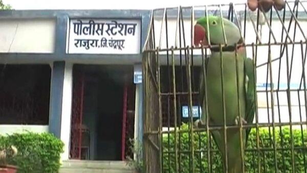 Арест попугая, Полиция Индии забрала в участок говорящую птицу - Sputnik Узбекистан