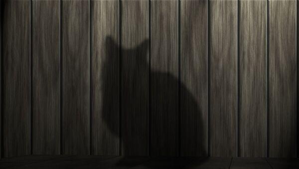 Тень кота - Sputnik Узбекистан
