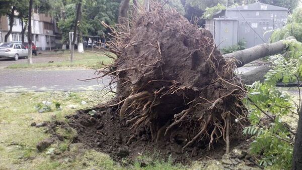 Последствия штормового ветра в Ташкенте - Sputnik Ўзбекистон