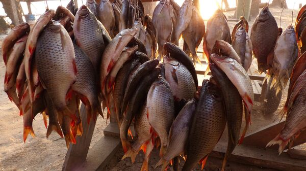 Рыбацкий улов на рыболовной базе - Sputnik Узбекистан