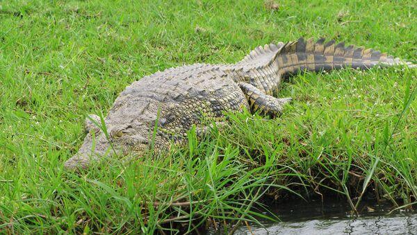 Alligator - Sputnik Oʻzbekiston
